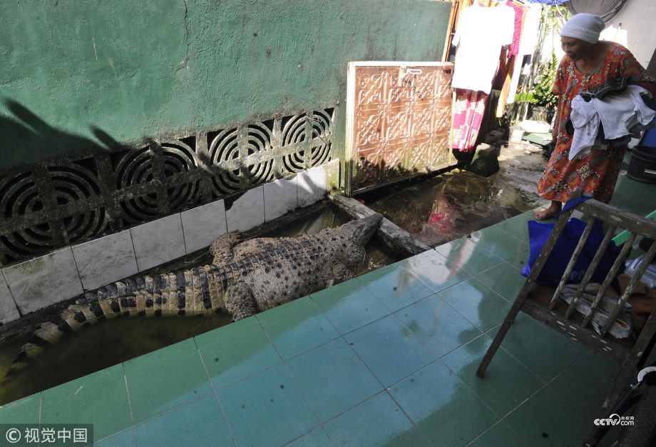 crocodile in house, viral story, viral news, latest story